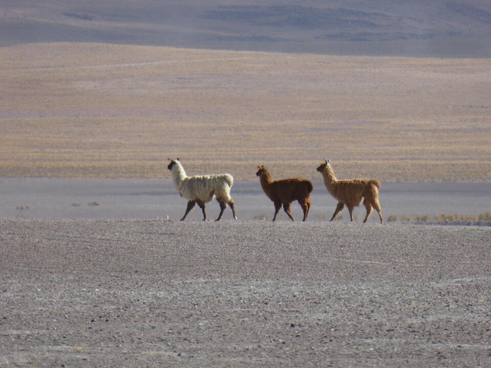 Bolivian flora and fauna