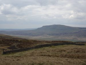 Pen-y-ghent from Darnbrook Fell