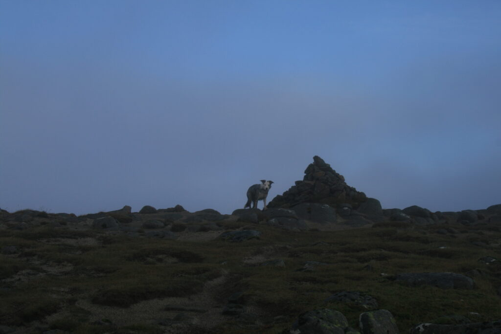 Jet at Sgor Gaibhre summit cairn