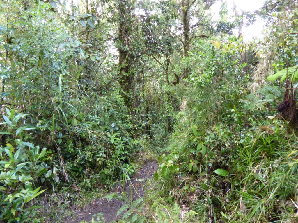 The path up Mount Hagen